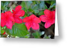 Floral Hedge Greeting Card