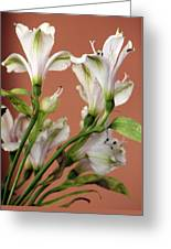 Floral Highlights Greeting Card
