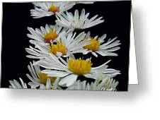 Floral Parade Greeting Card