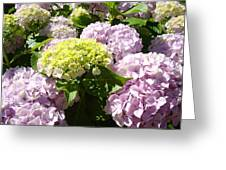 Floral Pink Lavender Hydrangea Garden Art Prints Greeting Card
