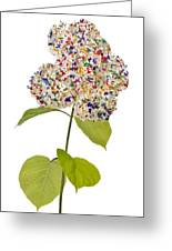 Floral Psychedelic Isolated Greeting Card