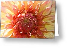 Floral Sun Greeting Card