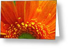 Floral Sunrise - Digital Painting Effect Greeting Card