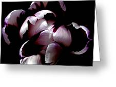 Floral Symmetry Greeting Card by Rona Black