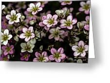 Floral Wallpaper Greeting Card