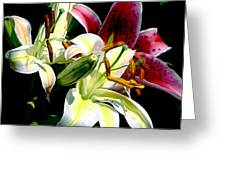 Florals In Contrast Greeting Card