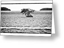 Florida Bay Greeting Card