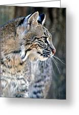 Florida Bobcat Greeting Card