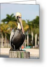 Florida Brown Pelican Greeting Card