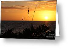 Florida Delight Greeting Card
