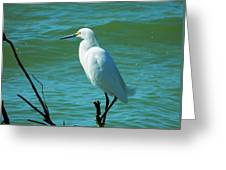 Florida Egret Greeting Card