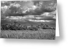 Florida Everglades 0184bw Greeting Card