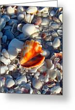 Florida Fighting Conch 1 Greeting Card