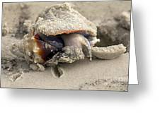 Florida Fighting Conch Greeting Card