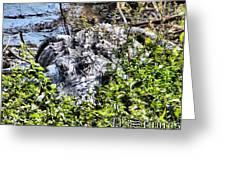 Florida Gator Greeting Card