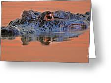Alligator For Florida  Greeting Card