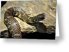 Florida King Snake Lampropeltis Getula Floridana Usa Greeting Card