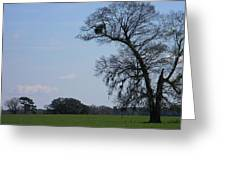 Florida Landscape Greeting Card