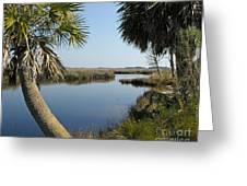 Florida Marshland Greeting Card
