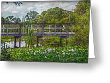 Florida Nature Greeting Card