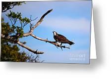 Florida Osprey Having Breakfast Greeting Card