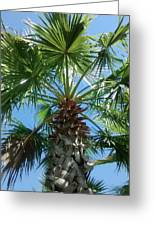 Florida Palm Tree Greeting Card