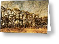 Florida Pine 4 Greeting Card