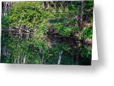 Florida River Greeting Card