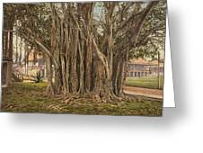 Florida Rubber Tree, C1900 Greeting Card