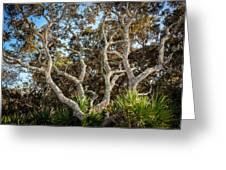 Florida Scrub Oaks Painted   Greeting Card