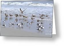 Florida Seabirds Greeting Card