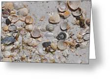 Florida Seashells Greeting Card