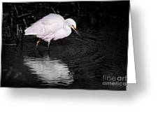 Florida Snow In Black And White Greeting Card