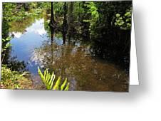 Florida Stream Greeting Card