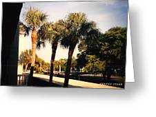 Florida Trees 2 Greeting Card
