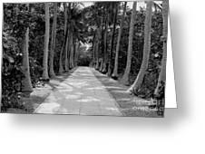 Florida Walkway Black And White Greeting Card