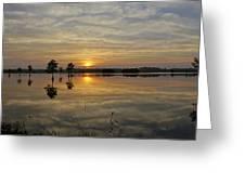 Florida Wetlands Greeting Card