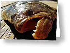 Flounder Face 2 10/26 Greeting Card