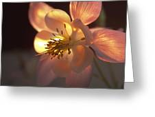 Flow Of Light Greeting Card
