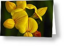 Flower 105 Greeting Card