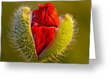Flower 124 Greeting Card