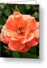 Flower 14 Greeting Card