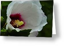 Flower 157 Greeting Card