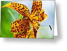 Flower 183 Greeting Card
