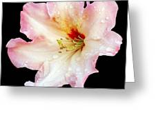 Flower 225 Greeting Card