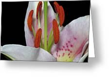 Flower 234 Greeting Card