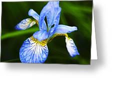 Flower 237 Greeting Card