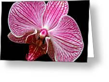 Flower 280 Greeting Card