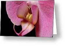 Flower 330 Greeting Card
