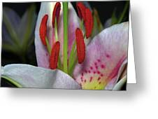 Flower  97 Greeting Card